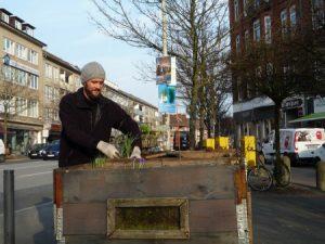 Kieler Honig ein urban gardnening Projekt