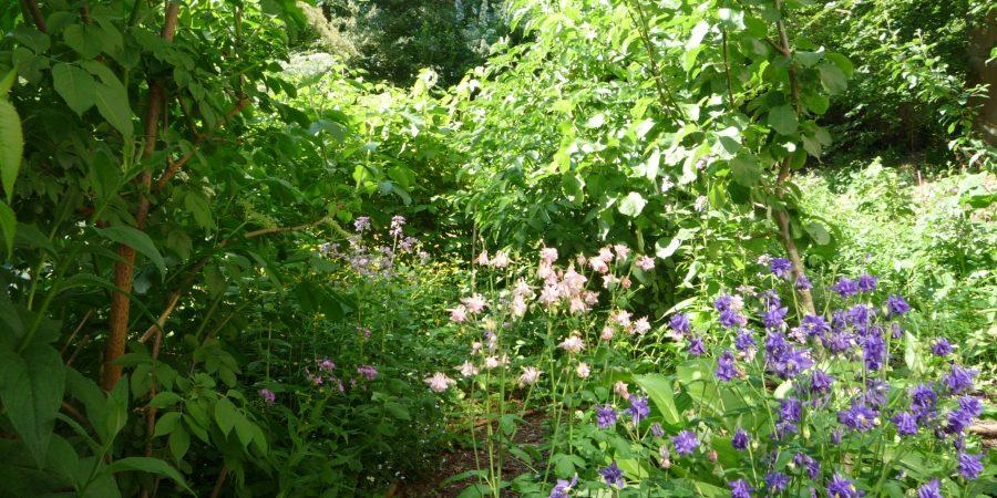 Ein Waldgarten ist ein typisches Permakultur-Biotop