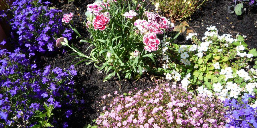 Garten am Servicehaus