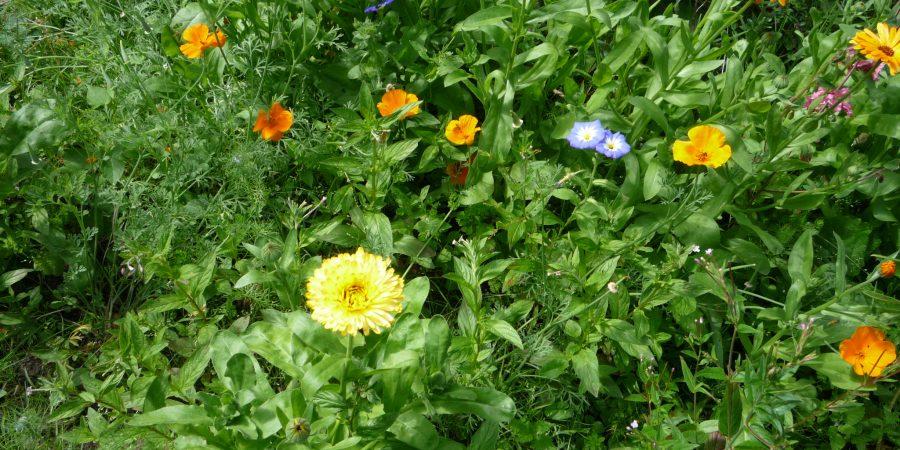 Sommerblumen locken Bienen an
