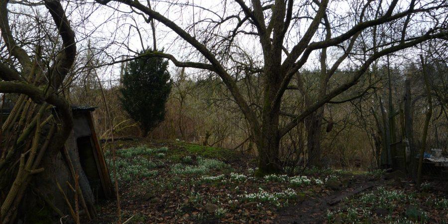 Naturgarten in Kiel
