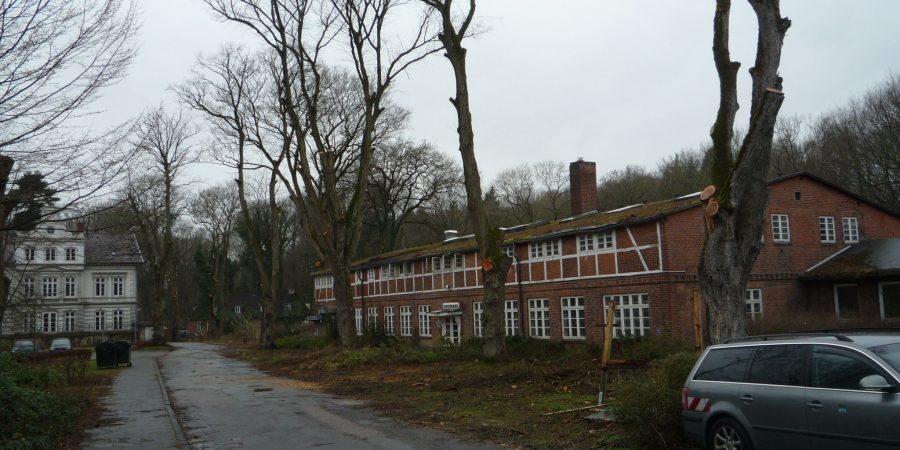 Baumeinschlag und Entastungen in Kiel