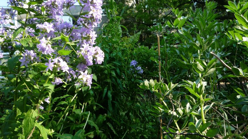 Das Rundbeet, ein urban gardening Projekt